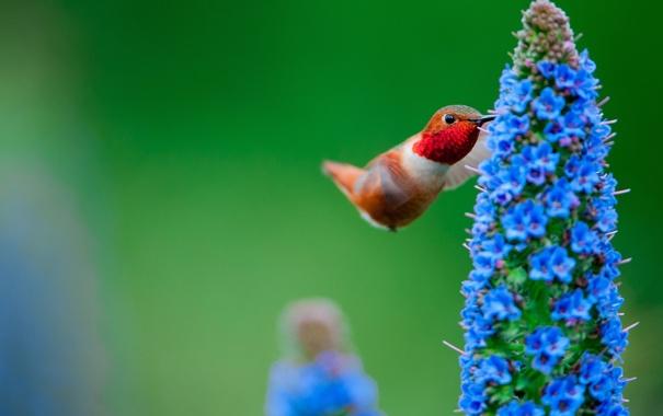 Фото обои цветок, макро, птица, растение, колибри
