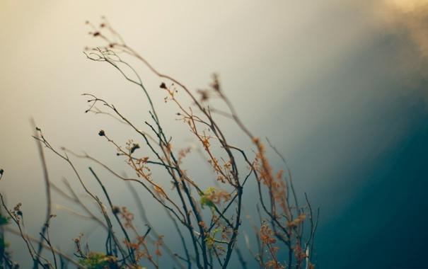 Фото обои макро, природа, фото, обои, цвет, растения, сухие
