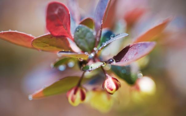 Фото обои листья, капли, макро, свет, фото, растение, бутоны