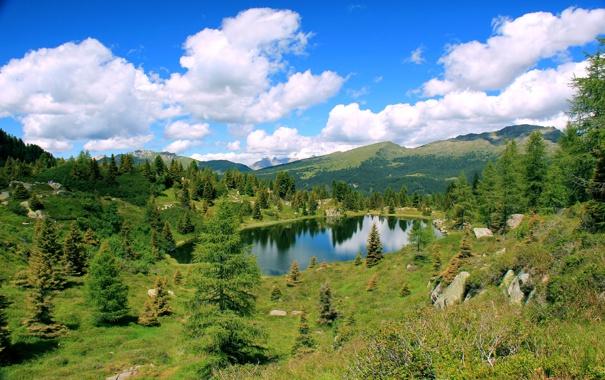 Фото обои зелень, лето, природа, озеро, пейзаж. лес