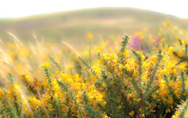 Фото обои природа, цветы, лето