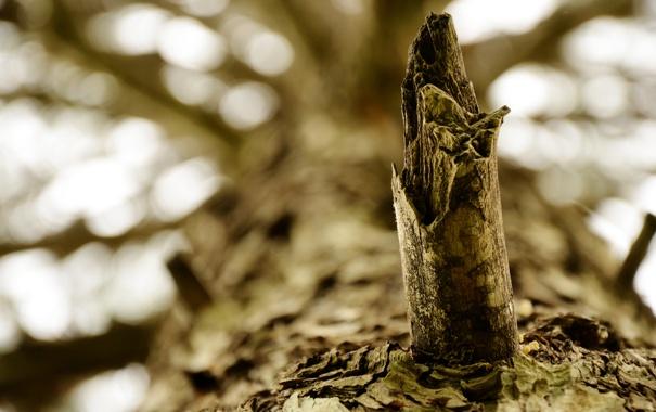 Фото обои макро, ветки, природа, дерево, фокус, кора, macro