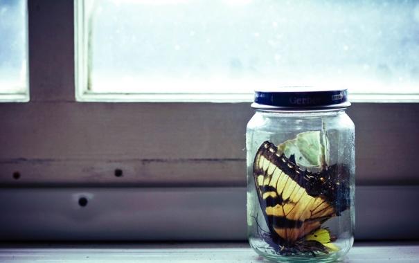 Фото обои бабочки, окно, банка, макро. стол