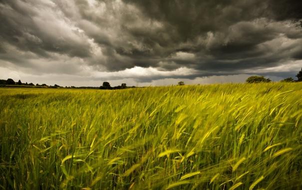 Фото обои поле, лето, небо, пейзаж