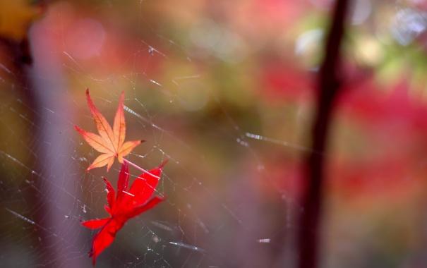 Фото обои листья, природа, паутина