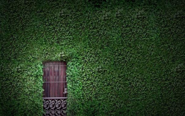 Фото обои зелень, листья, стена, листва, растения, дверь