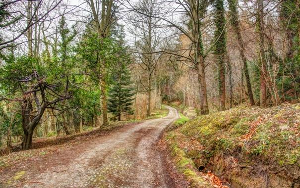 Фото обои дорога, осень, лес, обработка