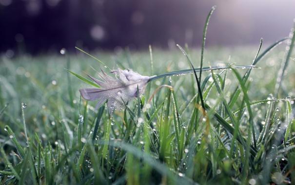 Фото обои трава, вода, капли, природа, grass, bokeh, перышко