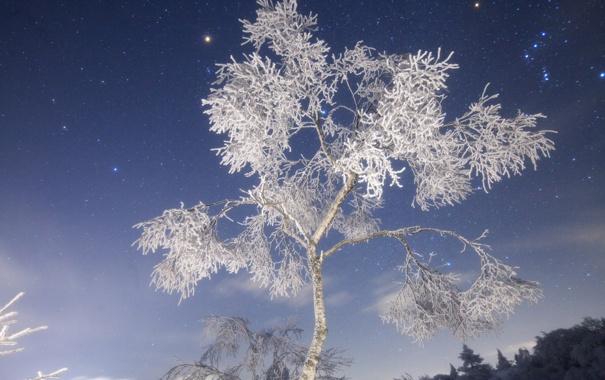 Фото обои зима, иней, ночь, природа, снежное дерево