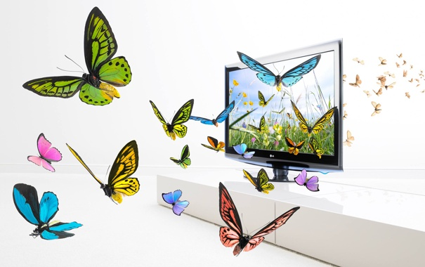 Фото обои бабочки, крылья, экран, изображение