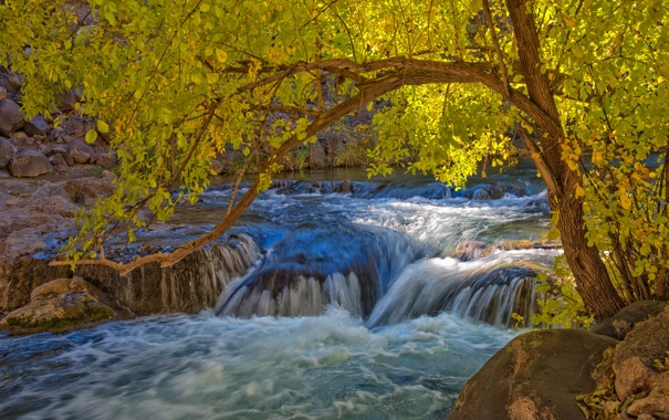 Фото обои осень, река, камни, дерево, пороги