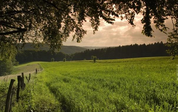 Фото обои зелень, трава, деревья, природа, фото