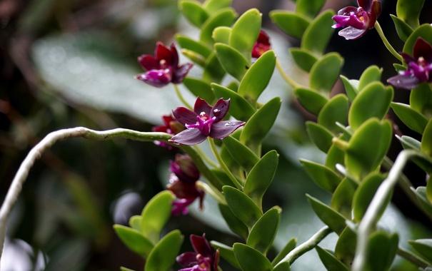 Фото обои лепестки, цветение, орхидея, Orchid, petals, bright, яркая