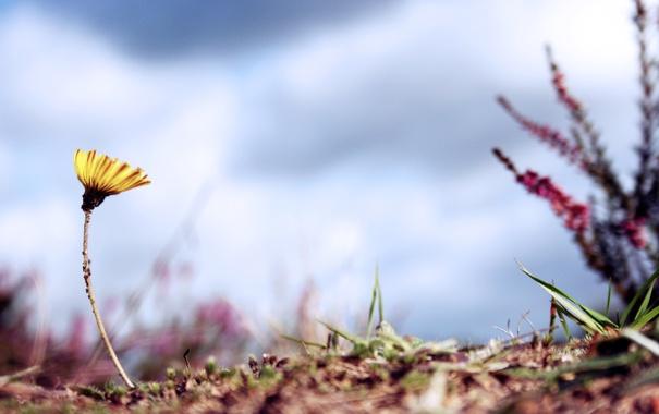 Фото обои макро, цветы, фото, фон, обои, растения, фоновые картинки