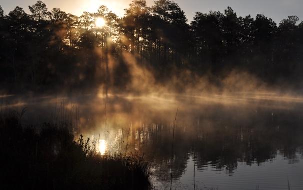 Фото обои вода, солнце, отражение, утро, Флорида, испарение, Дак пруд