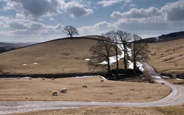 Фото обои дорога, пейзаж, овцы