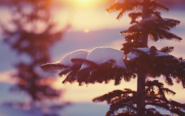 Фото обои зима, свет, снег, природа, елки