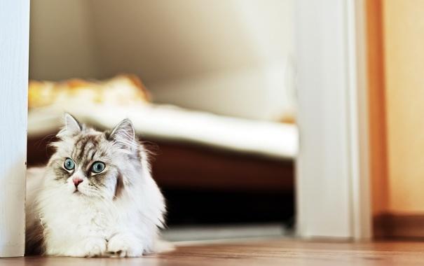 Фото обои кошка, дом, фон