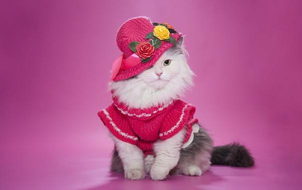 Фото обои кошка, шляпка, пушистая