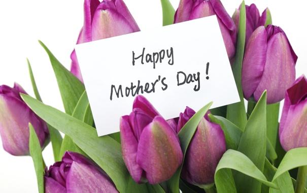 Фото обои любовь, цветы, тюльпаны