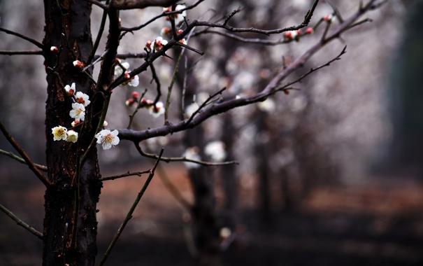 Фото обои цветы, ветки, дерево, весна, размытость, сад, цветение