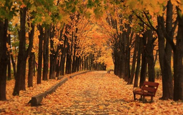 Фото обои осень, природа, парк, скамья