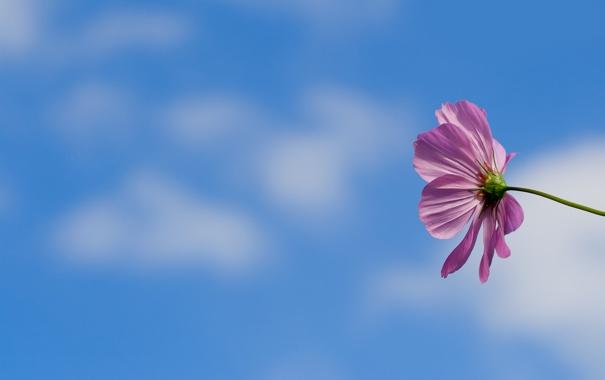 Фото обои небо, макро, цветы, фон, обои, лепестки