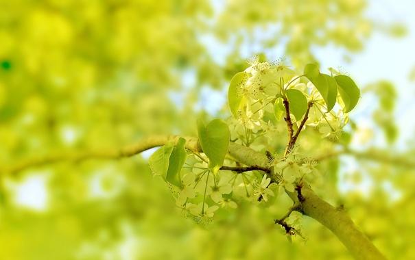 Фото обои Макро, Природа, Цвет, Дерево, Весна, Листья, Ветка