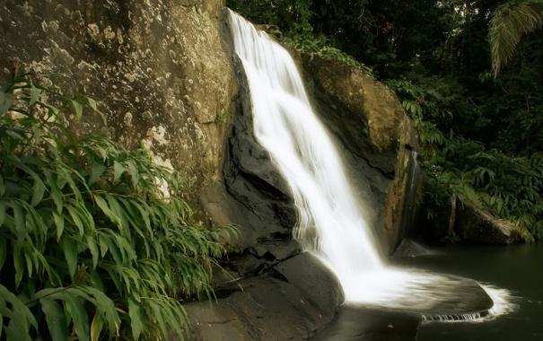 Фото обои природа, джунгли, скалы, водопад