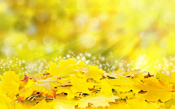 Фото обои листья, солнце, лучи, желтые, colorful, autumn, leaves