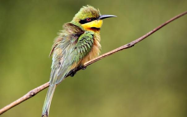 Фото обои птица, ветка, перья, клюв, хвост