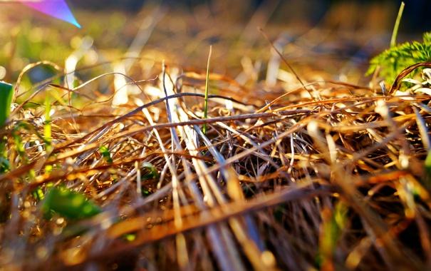 Фото обои солнце, макро, Трава, сено, отблеск, боке