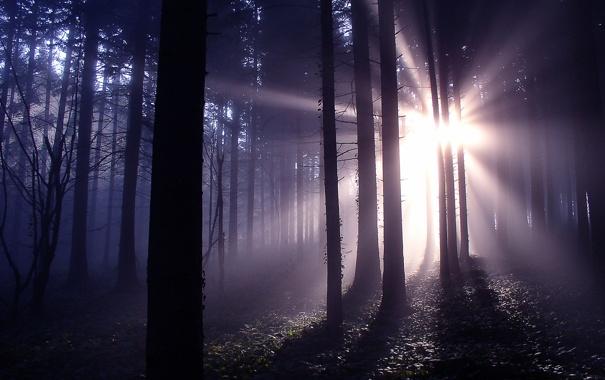 Фото обои лес, лучи, свет, природа
