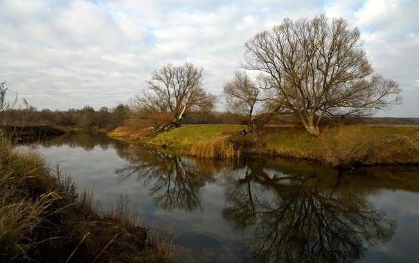 Фото обои деревья, пейзаж, река