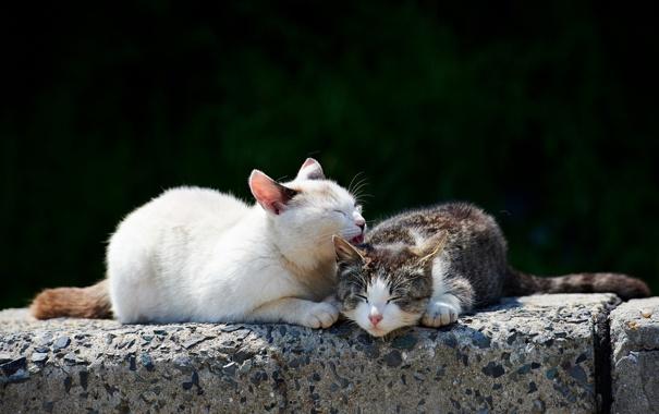 Фото обои кошки, природа, весна