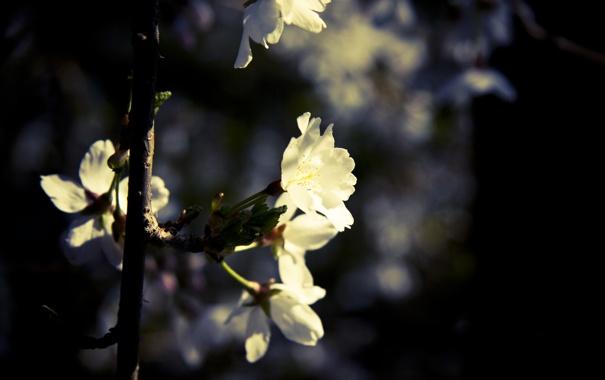 Фото обои цветок, листья, макро, растение, ветка, съемка