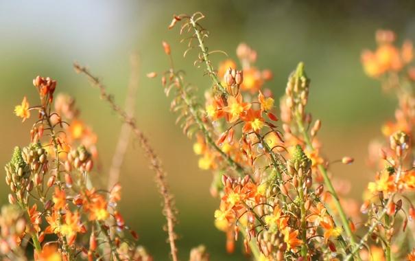 Фото обои желтые, оранжевые, цветы, полевые, размытость
