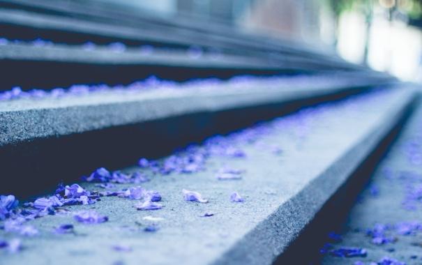 Фото обои лепестки, голубые, лестница, ступеньки, синие
