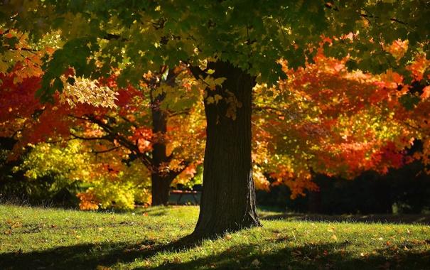 Фото обои природа, осень, парк, дерево