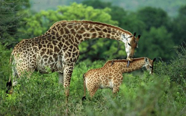 Фото обои животные, красиво, милые