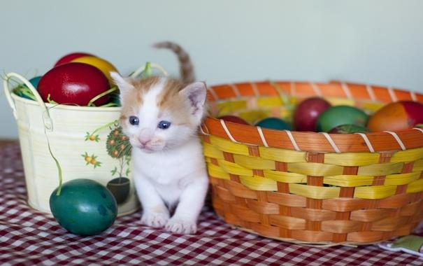 Фото обои яйца, пасха, котёнок, крашенки