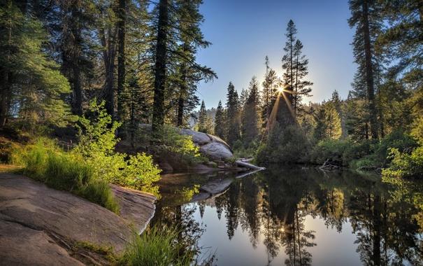 Фото обои лес, пейзаж, озеро