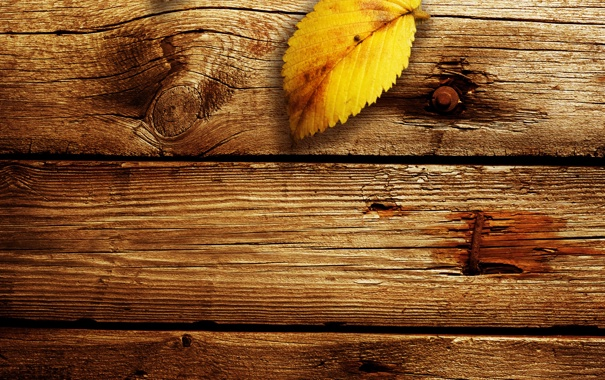 Фото обои осень, листья, макро, фото, дерево, доски, листок