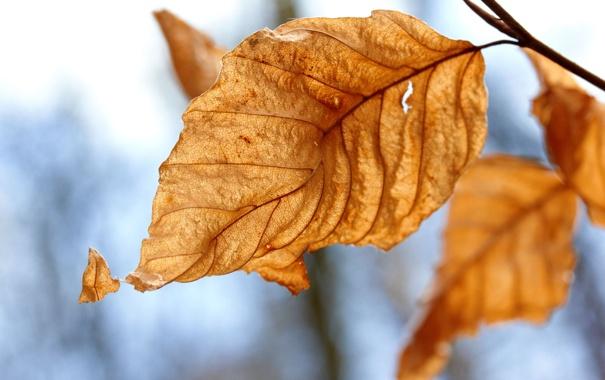 Фото обои осень, листья, макро, природа, жёлтый, фото, листок