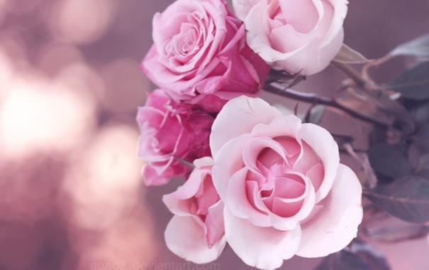 Фото обои макро, цветы, настроение