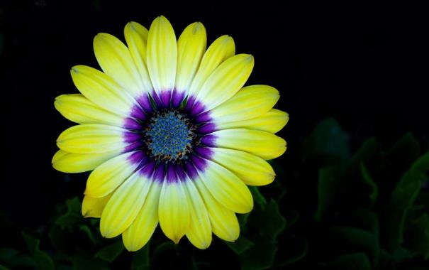 Фото обои цветок, краски, фон, лепестки