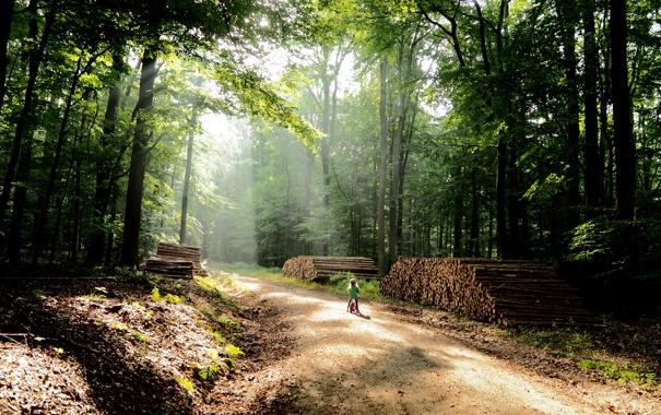 Фото обои дорога, лес, деревья, природа, велосипед, фото, ребенок