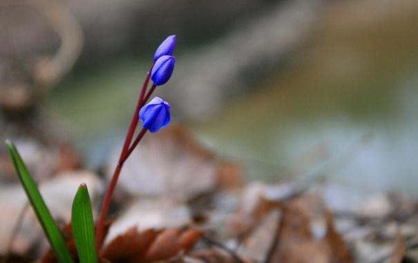 Фото обои листья, цветы, стебли, размытость, синие