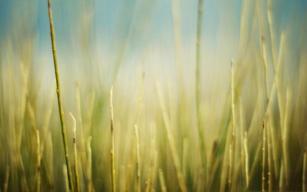Фото обои поле, трава, макро, природа, фото, фон, обои