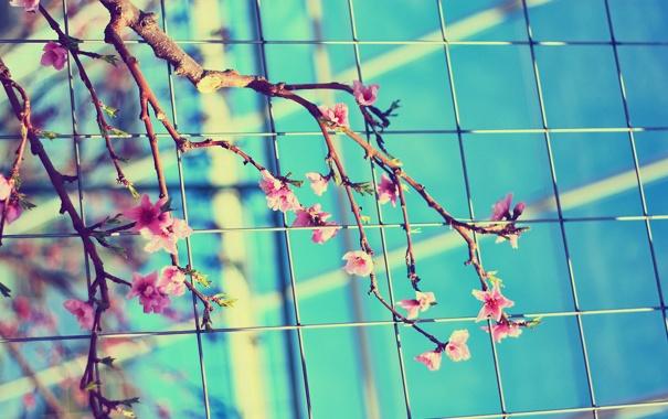 Фото обои листья, цвета, цветы, ветки, природа, фото, яркие